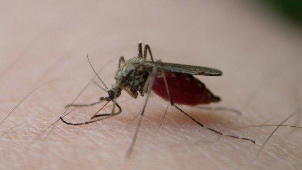 mosquito-bite-3-1410910-1280x960