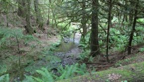 A creek along the site of a proposed trail in Kitsap County.